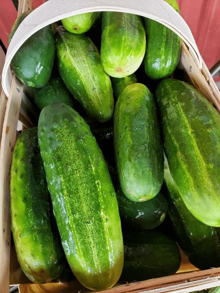 roberts farm market produce market