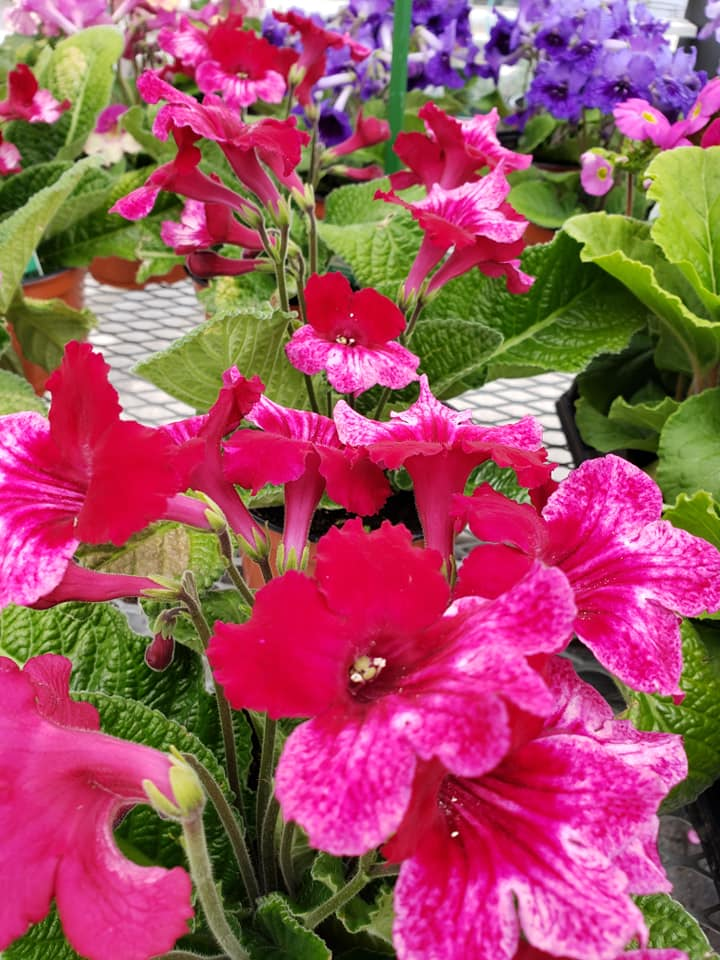 roberts farm market garden center